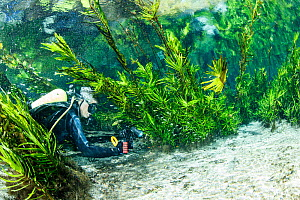 Scuba diver exploring a natural karst spring with clear water, Bonito, Mato Grosso do Sul, Brazil  -  Franco  Banfi