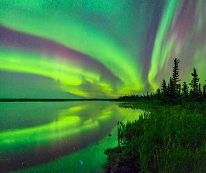 Aurora Borealis reflected in Polar Lake, wetland and conifers silhouetted along shore. Near Great Slave Lake, Northwest Territories, Canada. September 2018.  -  Jack Dykinga