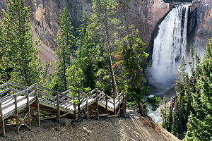 Lower Yellowstone Falls, Yellowstone River, Canyon Village Area of Yellowstone National Park, Wyoming, USA, September. - Kirkendall-Spring