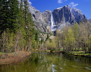 The Merced River and Upper Yosemite Falls in Yosemite National Park, California, USA. - Kirkendall-Spring