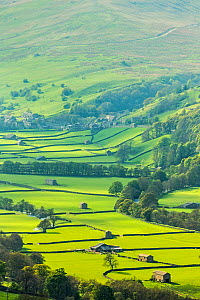 Landscape of fields with stone barn with dry stone walls, Gunnerside, Swaledale, North Yorkshire, England, UK. May 2013. - Guy Edwardes
