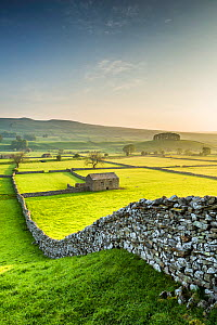 Wensleydale, Yorkshire Dales National Park, North Yorkshire, England, UK. May 2014 - Guy Edwardes