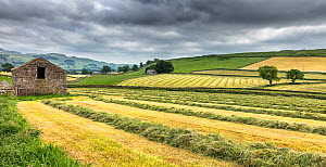 Hay cutting in Ribblesdale, Little Stainforth, Yorkshire Dales National Park, North Yorkshire, England, UK, June 2017. - Guy Edwardes