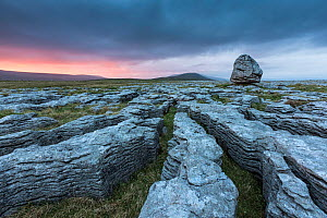 Grykes in limestone pavement at sunset,, Twisteleton Scar End, Yorkshire Dales National Park, Yorkshire, England, UK, May 2013. - Guy Edwardes