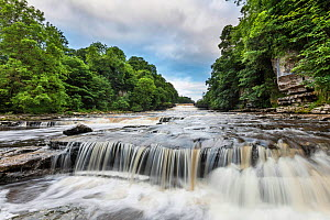 Aysgarth Falls, Yorkshire Dales National Park, North Yorkshire, England, UK, June 2016. - Guy Edwardes