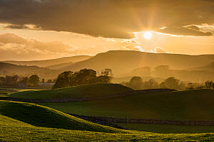 Landscape of fields at sunset, Yorkshire Dales National Park, Yorkshire, England, UK, May 2013. - Guy Edwardes