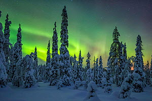 Riisitunturi in winter with Aurora Borealis, Kuusamo, Lapland, Finland. January 2016 - Guy Edwardes