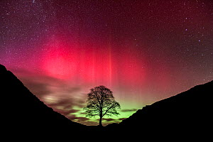 Aurora Borealis over Sycamore Gap, Hadrian's Wall, Northumberland, England. February 2014 - Guy Edwardes