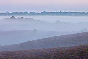 View over New Forest lowland heathland from Vereley Hill at dawn, Burley, New Forest National Park, Hampshire, England, UK. August 2011 - Guy Edwardes
