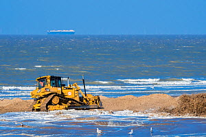 Bulldozer used for sand replenishment / beach nourishment to make wider beaches to reduce storm damage to coastal structures along the Belgian coast, Belgium, 2018 - Philippe Clement