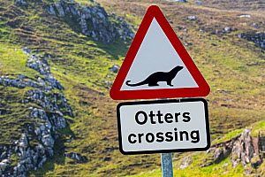 Eurasian otter / European otter (Lutra lutra) road warning sign for otters crossing street in coastal Scotland, UK - Philippe Clement