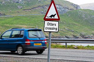 Eurasian otter / European otter (Lutra lutra) road warning sign for otters crossing street in coastal Scotland, Shetland, UK - Philippe Clement