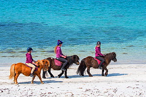 Three young girls / teenagers riding Shetland ponies on sandy beach along the Scottish coast on the Shetland Islands, Scotland, UK, June 2018.  -  Philippe Clement