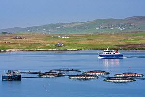 Ferry boat Linga sailing past sea cages / sea pens / fish cages from salmon farm in Laxo Voe, Vidlin on the Mainland, Shetland Islands, Scotland, UK, May 2018 - Philippe Clement