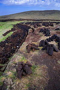 Peat extraction in moorland bog showing stacks of harvested peat drying to be used as traditional fuel, Shetland Islands, Scotland, UK, May 2018 - Philippe Clement