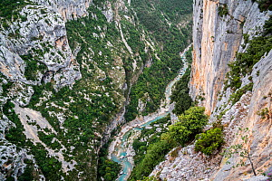 View into the Gorges du Verdon / Verdon Gorge canyon from belvedere along the Route des Cretes, Provence-Alpes-Cote d'Azur, France, September 2018  -  Philippe Clement