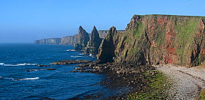 Duncansby Stacks, rock pinnacles south of Duncansby Head near John o' Groats, Caithness, Highland, Scottish Highlands, Scotland, UK, May 2017 - Philippe Clement
