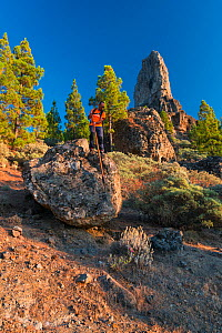 The Canarian Shepherd's Leap, a local tradition of walking and leaping across landscape using a pole. Roque Nublo sacred mountain, Tirajana ravine, Gran Canaria Island, The Canary Islands. August...  -  Juan  Carlos Munoz