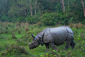 One-horned Asian rhinoceros (Rhinoceros unicornis), Chitwan National Park, Inner Terai lowlands, Nepal.  -  Juan  Carlos Munoz