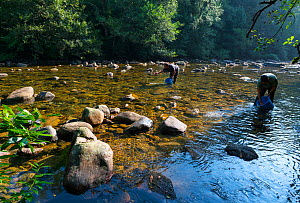 Conservation and repopulation of Atlantic salmon (Salmo salar) in River Gandara, Collados del Ason Natural Park, Cantabria, Spain. September 2018. - Juan  Carlos Munoz