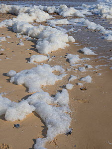 Sea foam on beach, England, UK. March - Gary  K. Smith