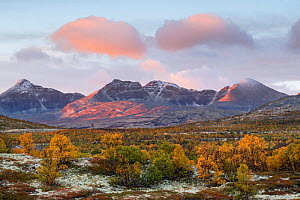 Yellow-coloured Mountain birch (Betula pubescens) forest with snow-covered mountain tops in the background. Fjell, Norway. September Grimsdalen, Fjell, Norway. September 2018.  -  Erlend Haarberg