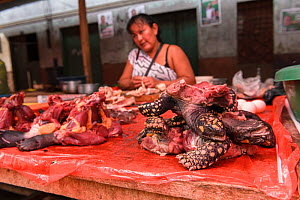 Various parts of South American yellow-footed tortoises (Chelonoidis denticulata), Vulnerable species, and terrapin species from the Amazon basin are sold for food in the Belen market, Iquitos, Peru.... - Emanuele Biggi