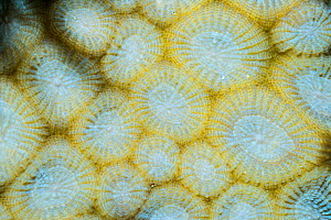 Coral, bleached. North Sulawesi, Indonesia. - Georgette Douwma