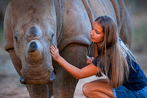 White rhinoceros (Ceratotherium simum) orphaned calf is comforted by its foster mother - a British veterinary nurse, at the Rhino Revolution wildlife rehabilitation centre near Hoedspruit, South Afric...  -  Neil Aldridge