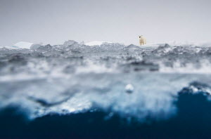 Polar bear (Ursus maritimus) in the drifting ice north of Svalbard, Norway. Highly commended in the GDT European Wildlife Photographer of the Year Awards 2018.  -  Ole  Jorgen Liodden