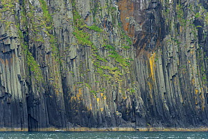 Sea cliffs on the Shiant Isles, showing basalt columns. The Minch, Outer Hebrides, Scotland. July 2016.  -  Chris Gomersall
