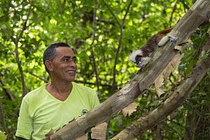 Researcher from Proyecto Titi observing feeding Cotton-top tamarin (Saguinus oedipus). Northern Colombia. 2016.  -  Suzi Eszterhas