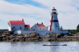 Humpback whale (Megaptera novaeangliae) - surfacing in front of East Quoddy Lighthouse, Head Harbor, Campobello Island Bay of Fundy, New Brunswick, Canada - Mark Carwardine