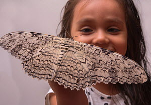 Girl with a large White Witch moth (Thysania agrippina) on her hand. Iquitos, Peru. Model released.  -  Mark  Bowler