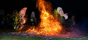 Traditional Baining Fire Dance. Performed by men from the Baining tribe who enter a trance like state and dance around and through the fire in masks thought to resemble insects to contact the spirit w... - Nick Garbutt
