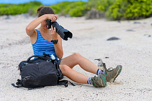Tourist photographs an Espagnola mockingbird (Mimus macdonaldi) that has landed on her boot. Espagnola Island, Galapagos National Park, Galapagos Islands. Model released.  -  Alex Mustard