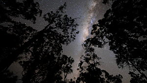 Tracking timelapse of stars and the Milky Way seen through the rainforest canopy, Wet Tropics World Heritage Area, North Queensland, Australia.  -  Jurgen Freund