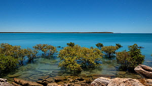 Timelapse of the tide rising at Cape Leveque, with Mangroves (Rhizophora) in the foreground, Kimberley, Western Australia, 2016 - Jurgen Freund