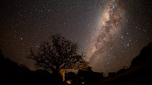Timelapse of Boab trees (Adansonia gregorii) at night, with stars and the Milky Way, Kimberley, Western Australia, 2016. - Jurgen Freund