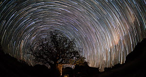 Timelapse of Boab trees (Adansonia gregorii) at night, with star trails, Kimberley, Western Australia, 2016. - Jurgen Freund