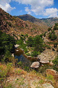 Golo River gorge, Scala di Santa Regina and surrounding mountains, Regional Natural Park of Corsica, France. July 2018. - Mike Read