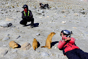 Tourists taking pictures of Himalayan marmots (Marmota himalayana) with mobile phone, Chantang Wlidlife Sanctuary. Ladakh, India, September 2018. - Enrique Lopez-Tapia