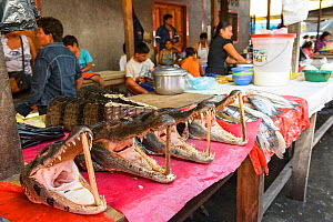 Caiman heads for sale at Belen markets, Iquitos, Peru July 2014 - Emanuele Biggi