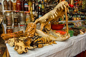 Animal body parts including crocodilian skull, for sale at market, Belen markets of Iquitos, Peru. July 2014. - Emanuele Biggi