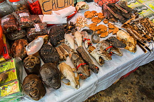 Animal body parts including monkey and snake heads, for sale at Belen market in Iquitos, Peru. . July 2014 - Emanuele Biggi