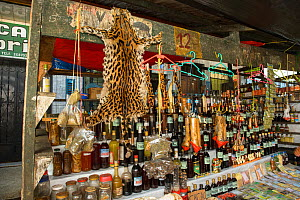 Belen Market, with Ocelot pelt for sale, Iquitos, Peru. July 2014 - Emanuele Biggi