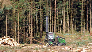 Clear felling harvester working in a conifer plantation, Carmarthenshire, Wales, UK, June. - Dave Bevan