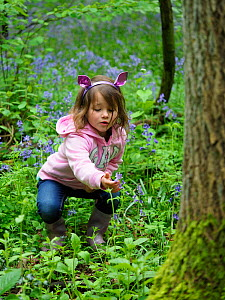 Girl looking at Bluebell (Hyacinthoides non-scripta) in woodland, Hertfordshire, England, UK, May. Model released. - Andy Sands