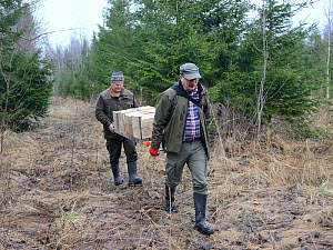 Researchers carrying ladder and nest boxes for Siberian flying squirrel (Pteromys volans). Mature mixed forest, Estonia. April 2018. Model released.  -  Nick Upton