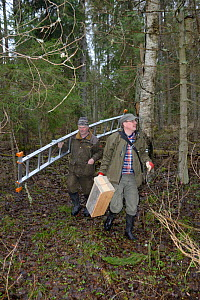 Researchers carrying equipment prior to fitting nest box for Siberian flying squirrel (Pteromys volans). Mature mixed forest, Estonia. April 2018. Model released.  -  Nick Upton